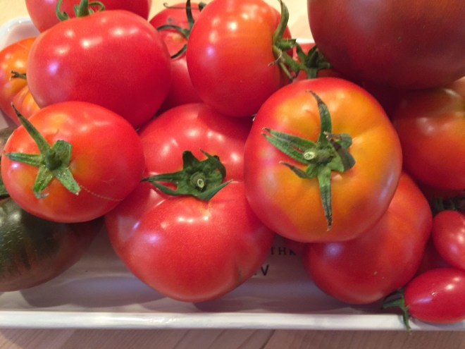 The first garden tomatoes