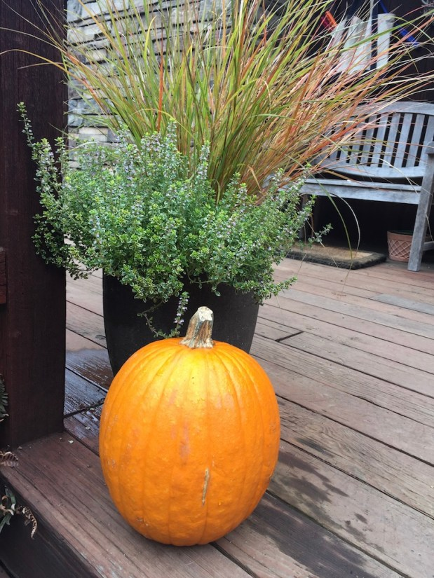 In My Garden – November 2018