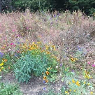 Pollinator Garden - Before