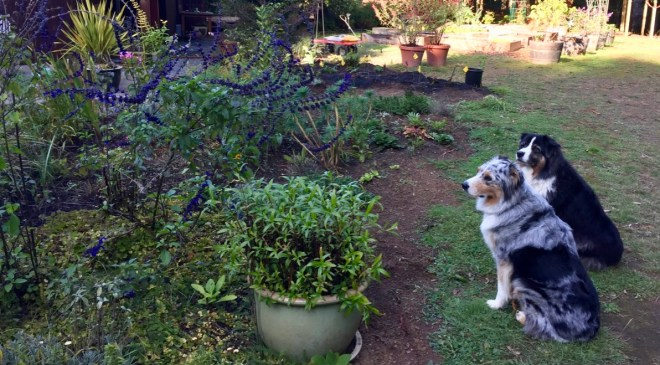 Dogs and garden