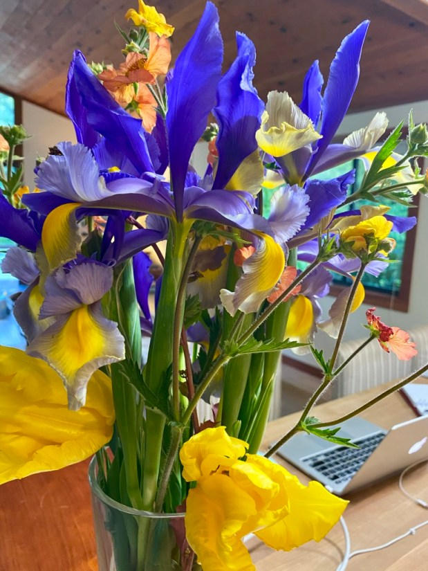 In My Garden – April 2020