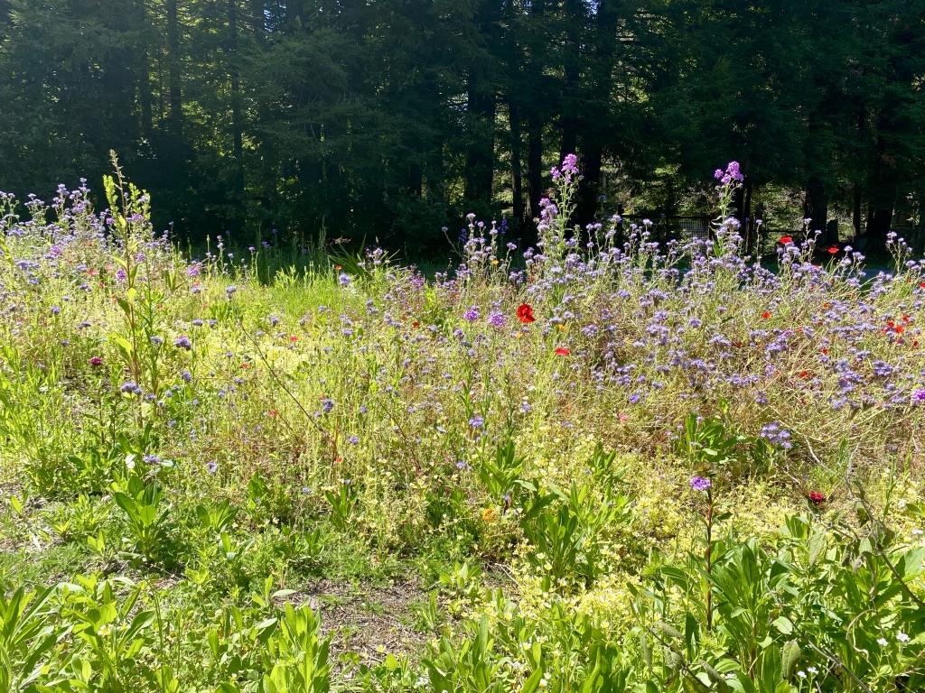 Pollinator Garden May 2020