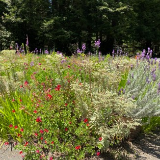 Pollinator Garden - June 2020