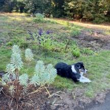 Casey enjoying the garden with me