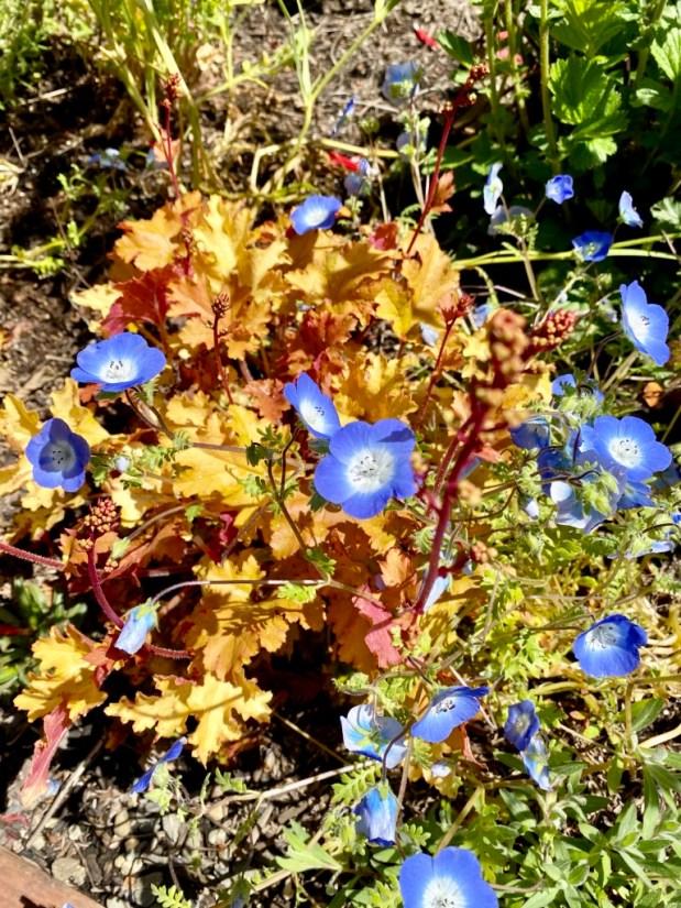 May 2021 – In My Garden