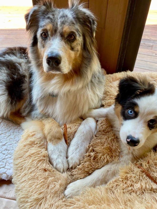 Quinn and her friend puppy Shanna