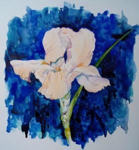 daylily on blue field