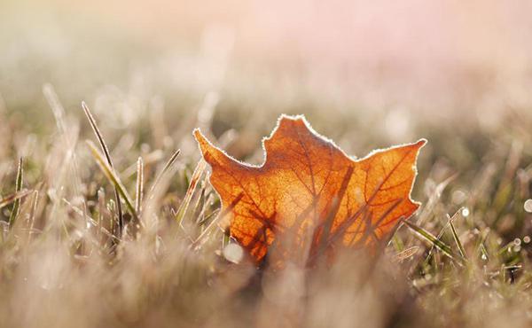 秋の落ち葉 歌
