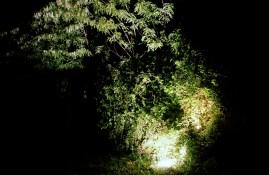 Daniele Sambo: SOWN, light installation, MMSU Rijeka, May 2013