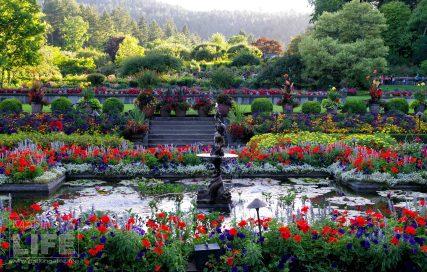 Butchart Gardens 56 Making A Life