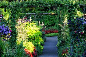 Butchart Gardens 70 Making A Life