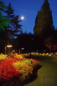 Butchart Gardens 80 Making A Life