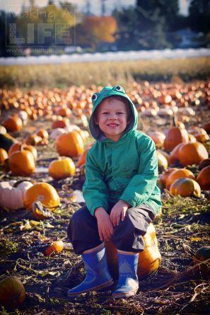 pumpkin-patch_making-a-life-5