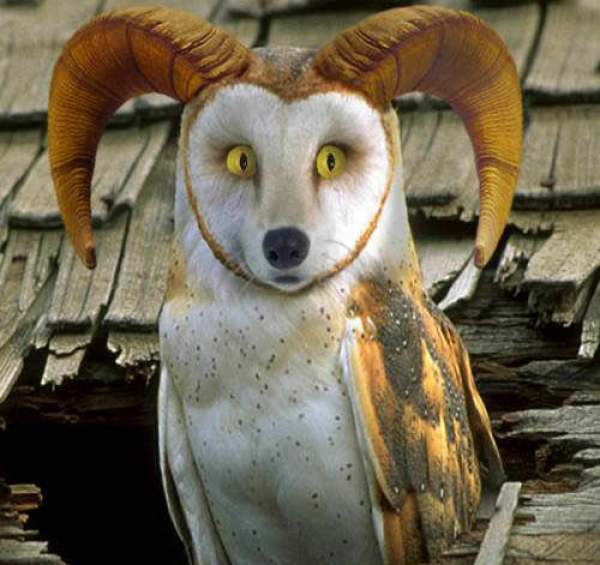 animale-ciudate-14