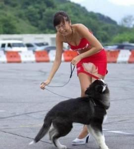 bad-bad-dog
