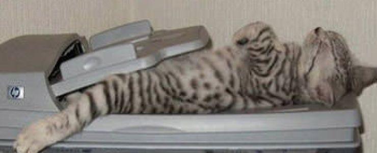 cat-11