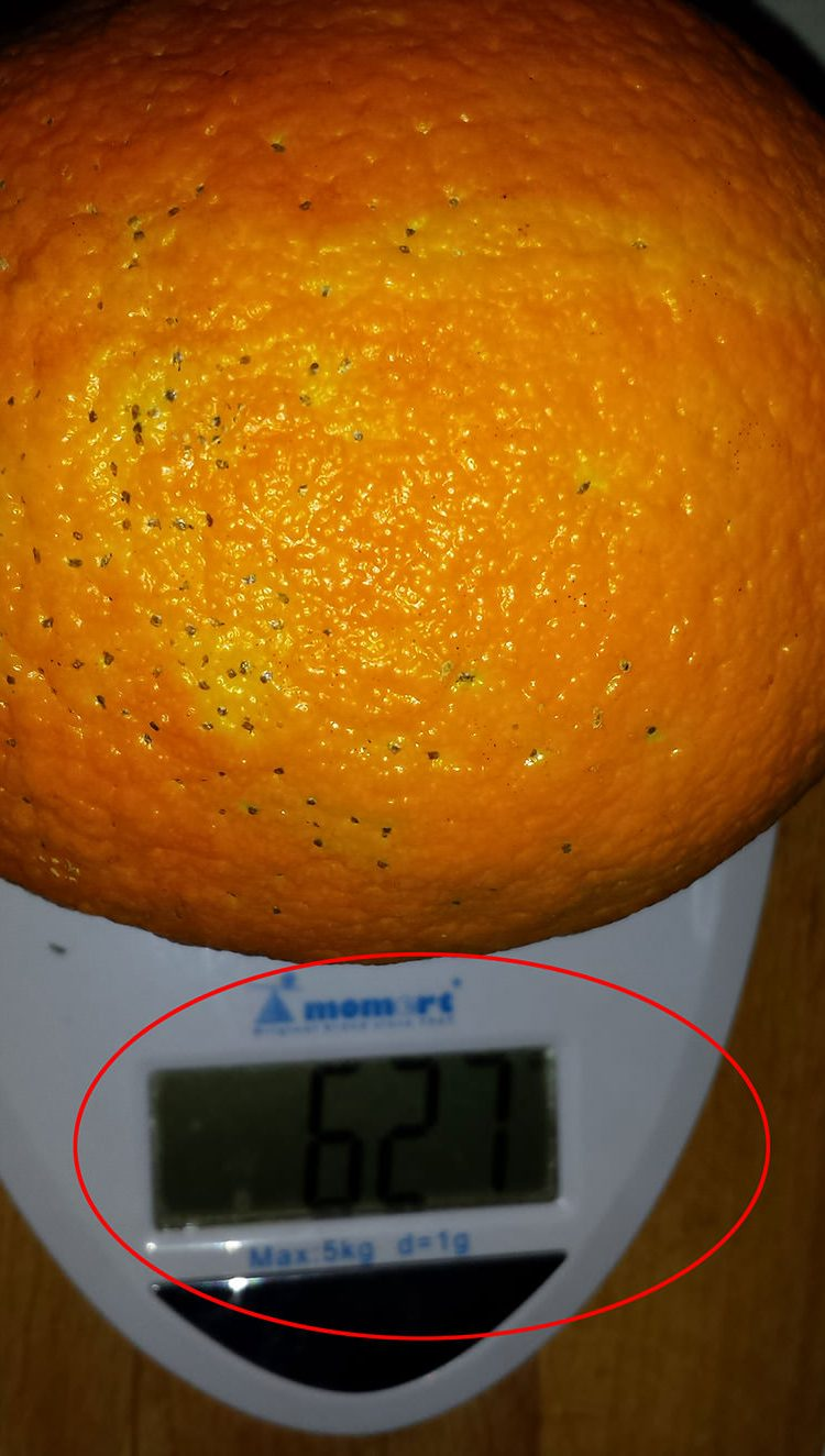 biggest orange-1