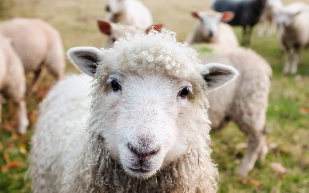 Aprende los animales de la granja en inglés con tus hijos