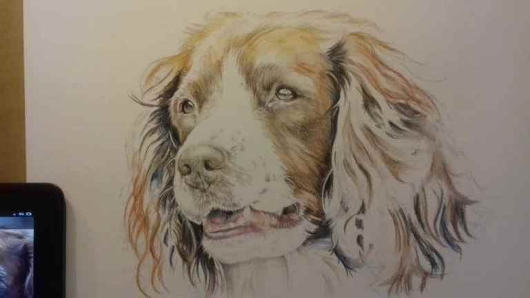 how-to-draw-a-realistic-dog