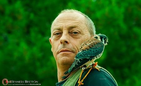 cernícalo-americano,2-halconcito-colorado-o-cuyaya-(Falco-sparverius)-epagneul-breton-DeAbelK311tt3web