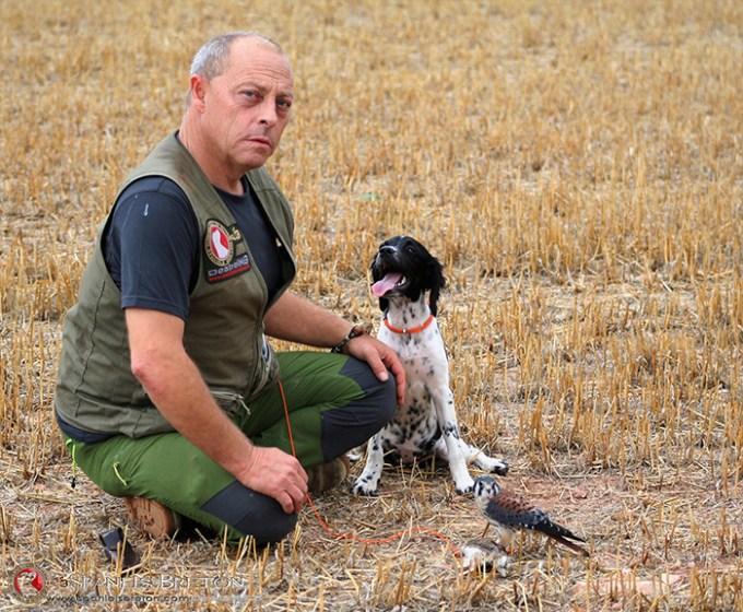 cernícalo-americano,2-halconcito-colorado-o-cuyaya-(Falco-sparverius)-epagneul-breton-DeAbelK311tt6tyweb