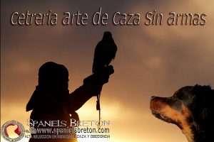 Cetrería Spaniels Bretón DeAbelK3