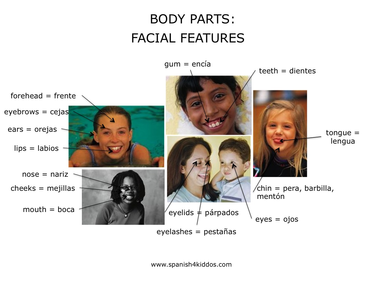Body Parts In English And Spanish Spanish4kiddos