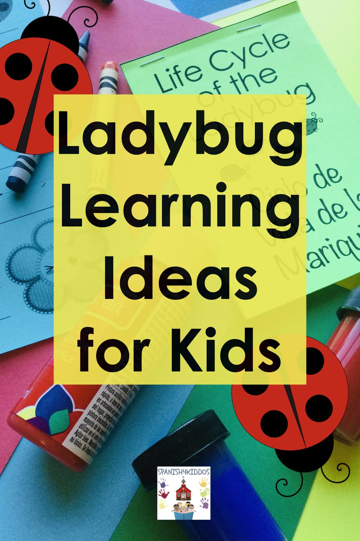 ladybug bilingual learning