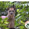 May Spanish Immersion Cycle