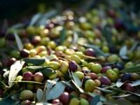 оливки из Испании в цифрах
