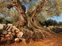 Интересные факты об оливках