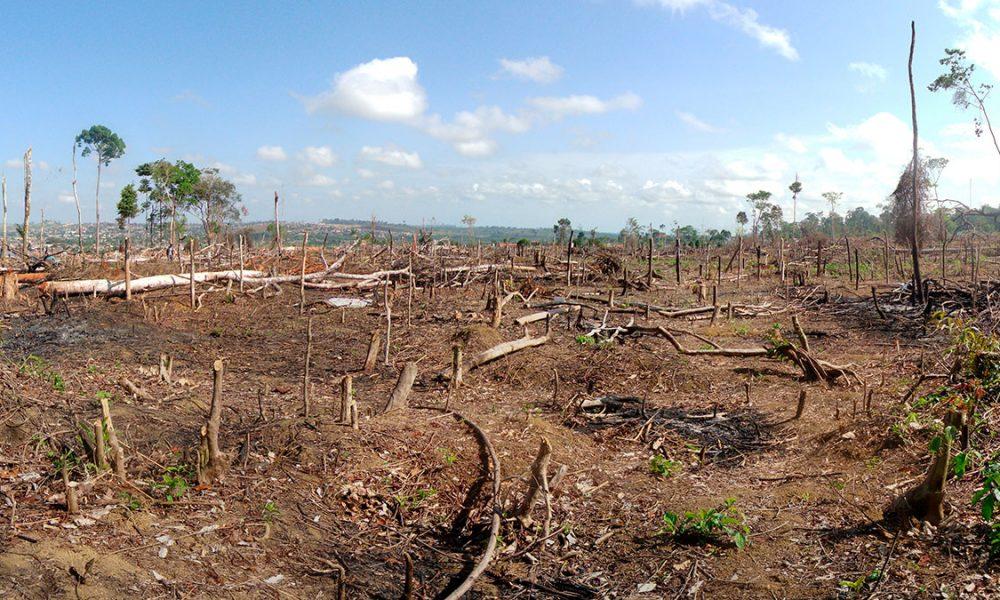 """La OMS denuncia que """"el 70% de los últimos brotes epidémicos han comenzado con la deforestación"""""""