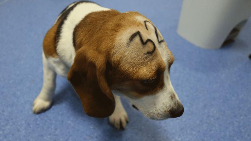 Presentan una querella criminal contra el laboratorio Vivotecnia por maltrato animal