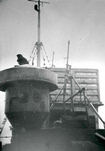 Ombord på M/S Anna Mærsk, 1941-1942. Foto: Alfred Runge Erichsen