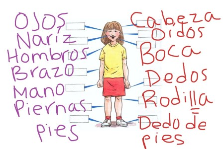 Body parts in spanish 4k pictures 4k pictures full hq wallpaper female body parts in spanish diagram human magnificent anatomy female body parts in spanish diagram human magnificent body parts in spanish diagram pictures ccuart Choice Image
