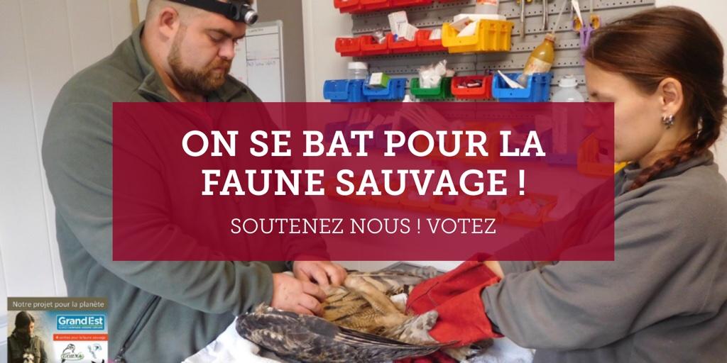 On se bat pour la faune sauvage !