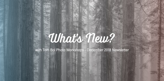 What's New? Newsletter