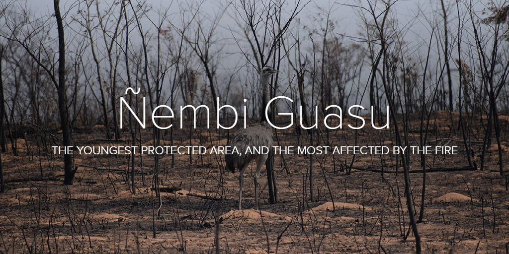 Ñembi Guasu, the youngest protected area, the most affected by the fire