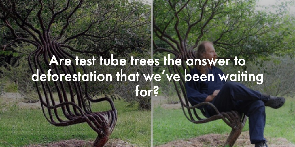 Are test tube trees the answer to deforestation that we've been waiting for?