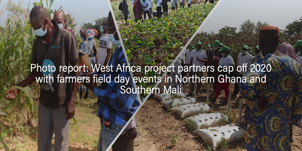 Photo report: West Africa project partners cap off 2020 with farmers field day events in Northern Ghana and Southern Mali