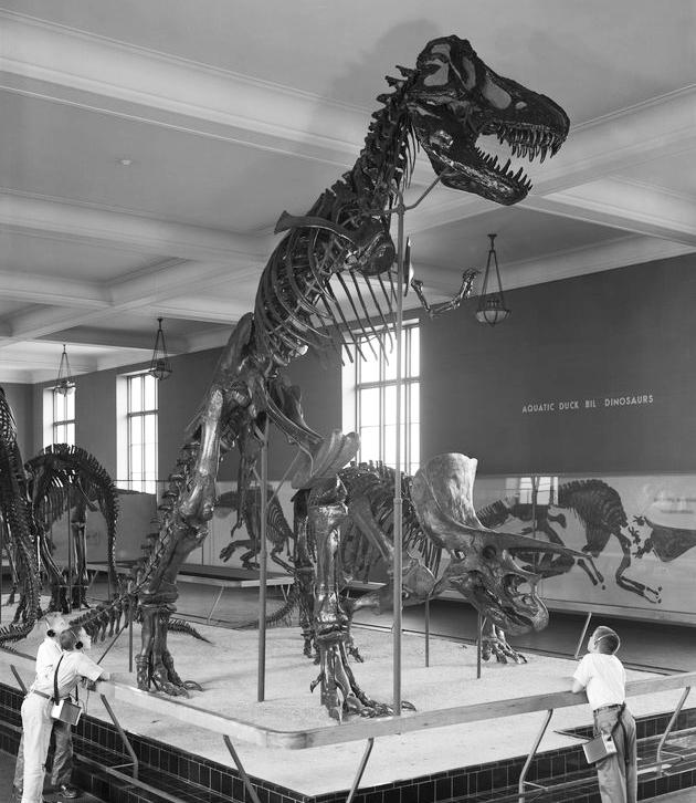 Specimen AMNH 5027, Tyrannosaurus rex, was discovered as a nearly complete skeleton at Big Dry Creek, Montana, by the famous fossil hunter Barnum Brown. It's been a centerpiece at the American Museum of Natural History for more than a century. This 1960s-era image is more or less what the Dinosaur Hall looked like in 1989, when Chip Kidd stopped by. Photo courtesy American Museum of Natural History