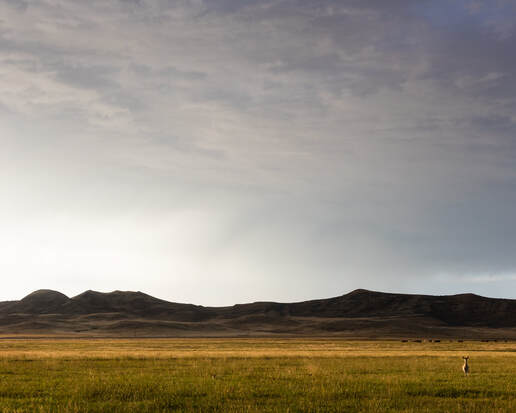 The view across the plains at Ucross Foundation in Wyoming. Photo by Jennifer Garza-Cuen, courtesy Ucross Foundation