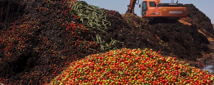 Startup Nipping Trillion Dollar Food Waste Problem in the Bud