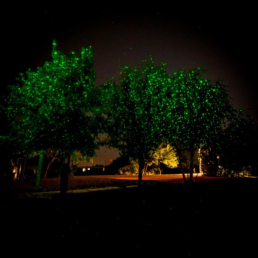 Tampa Zoo Christmas Lights