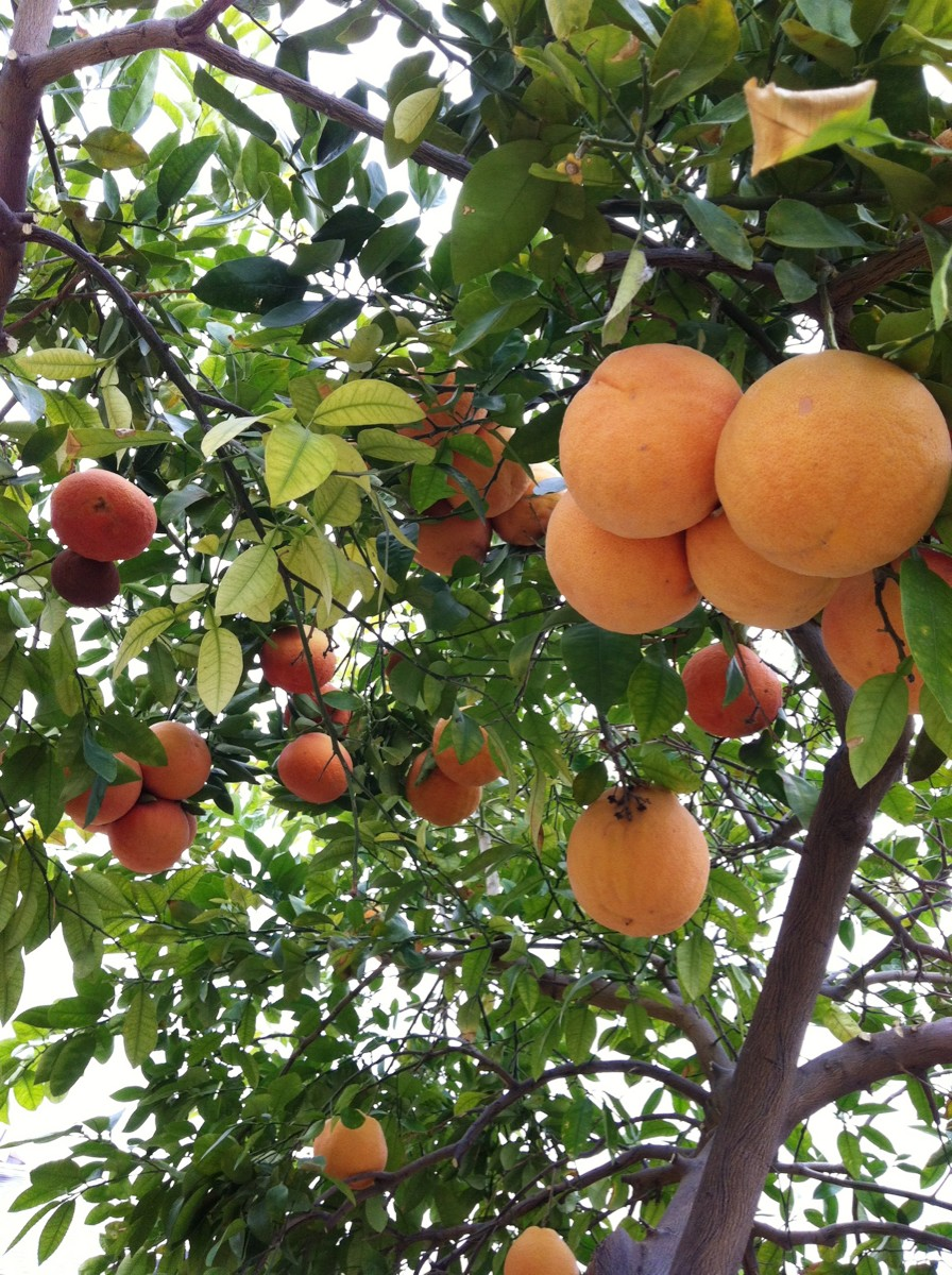 When Life Gives You Grapefruits Sparkle Living Blog