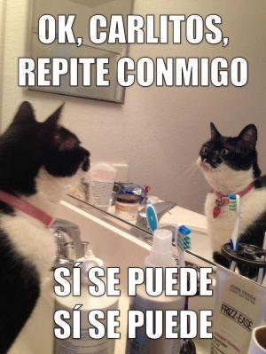 ff924400c7d30240f10a23ba91507b0a--funny-spanish-spanish-memes.jpg