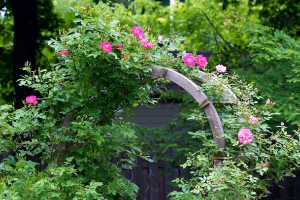 The Rose Arch