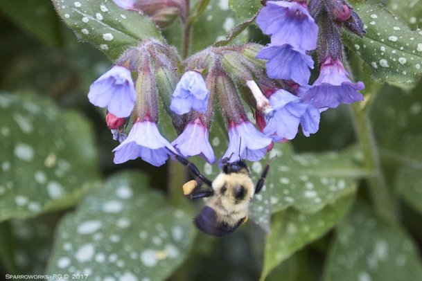 Pollination in action