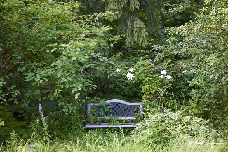 Clematis in a shady corner