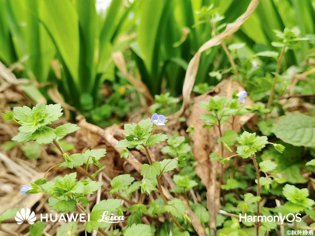 Huawei P50 Camera Samples